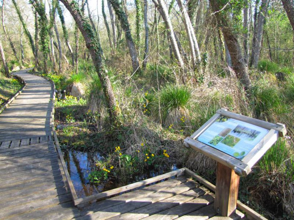 The Groléjac Marsh Nature Reserve