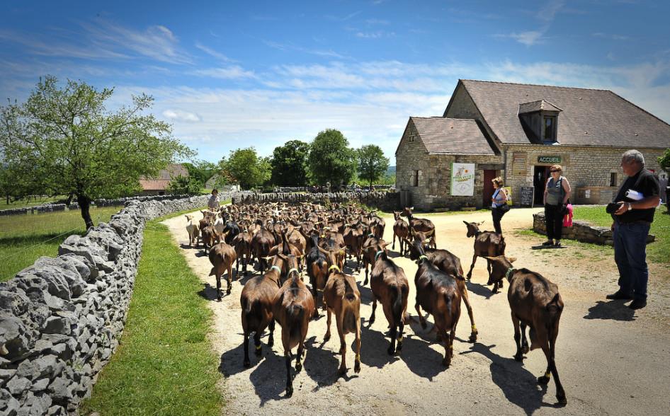 """""""La Borie d'Imbert"""" goat's farm – Rocamadour"""