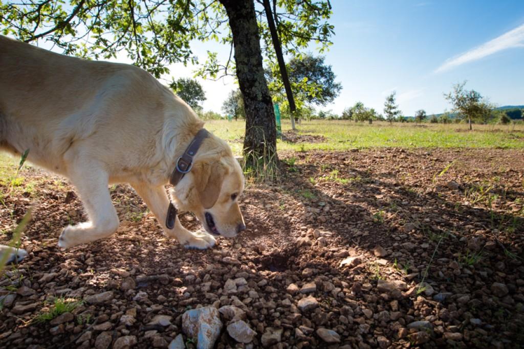 La Ferme de la truffe – Cuzance